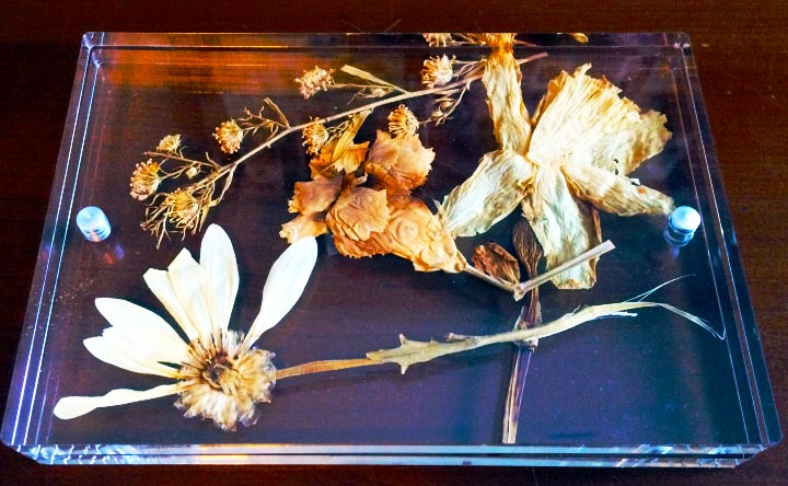 pressed_flowers_framed