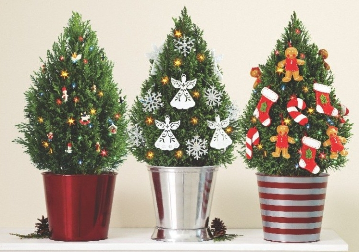 tabletop trees